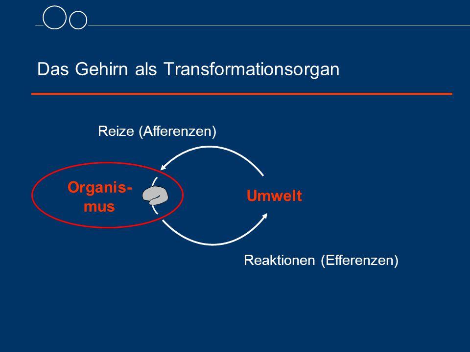 Das Gehirn als Transformationsorgan Reaktionen (Efferenzen) Reize (Afferenzen) Umwelt Organis- mus