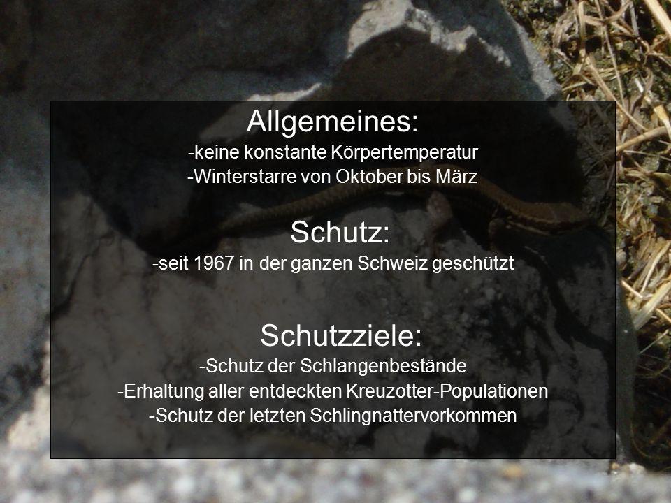 Allgemeines: -keine konstante Körpertemperatur -Winterstarre von Oktober bis März Schutz: -seit 1967 in der ganzen Schweiz geschützt Schutzziele: -Schutz der Schlangenbestände -Erhaltung aller entdeckten Kreuzotter-Populationen -Schutz der letzten Schlingnattervorkommen