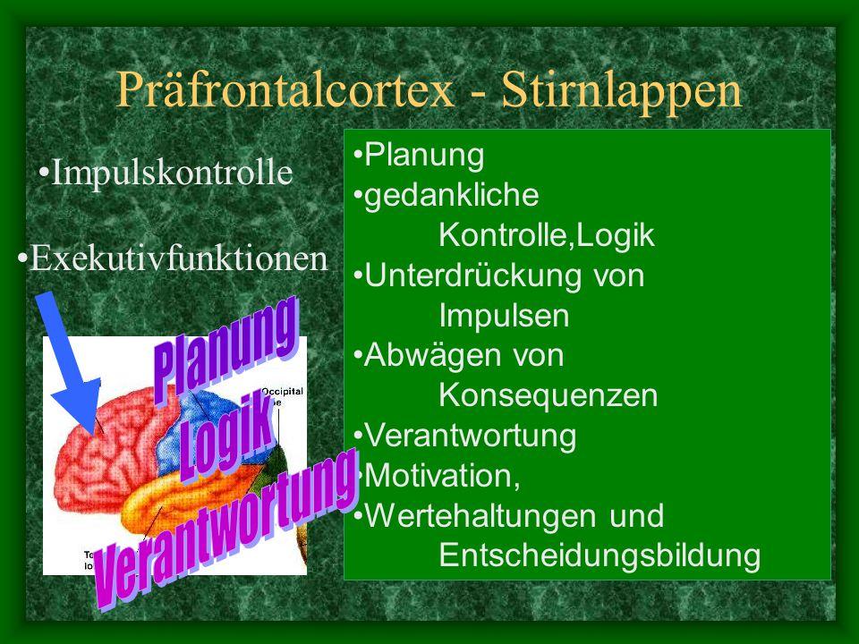 Zwischenhirn Epithalamus  Epiphyse  Me -lantonin) Thalamus=Umschaltstelle für Sinnesbahnen; Subthalamus (motorische Kerne) Hypothalamus (vegetatives Nervensystem)  Hirnanhangdrüse  endokrines System verbindet Neocortex und Hirnstamm.