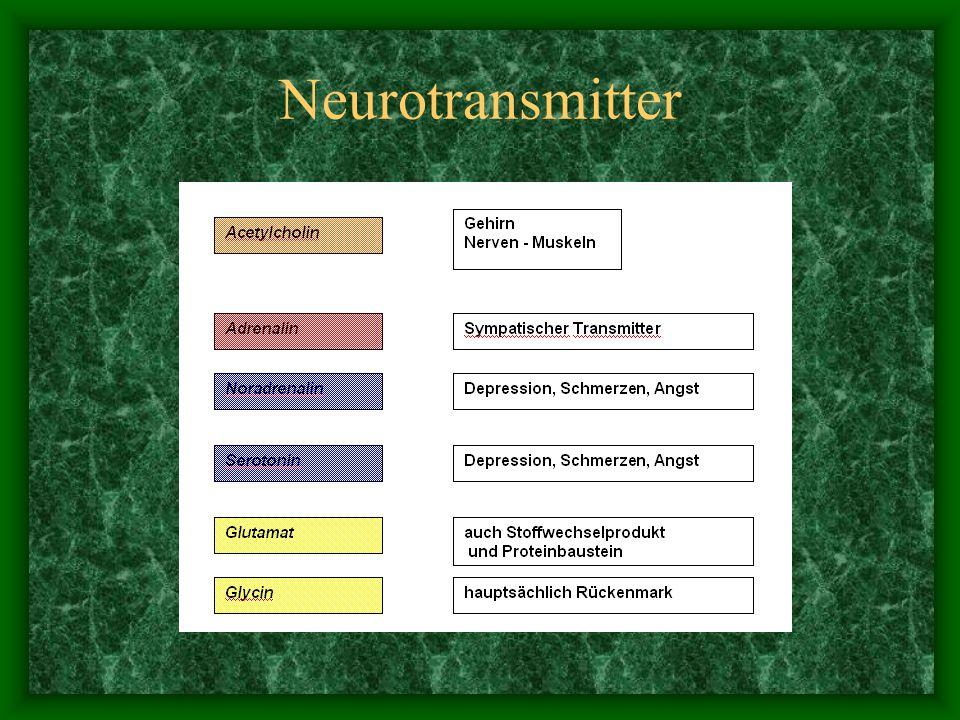 Synapse NEUROTRANSMITTER