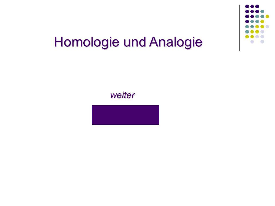 Homologie und Analogie weiter