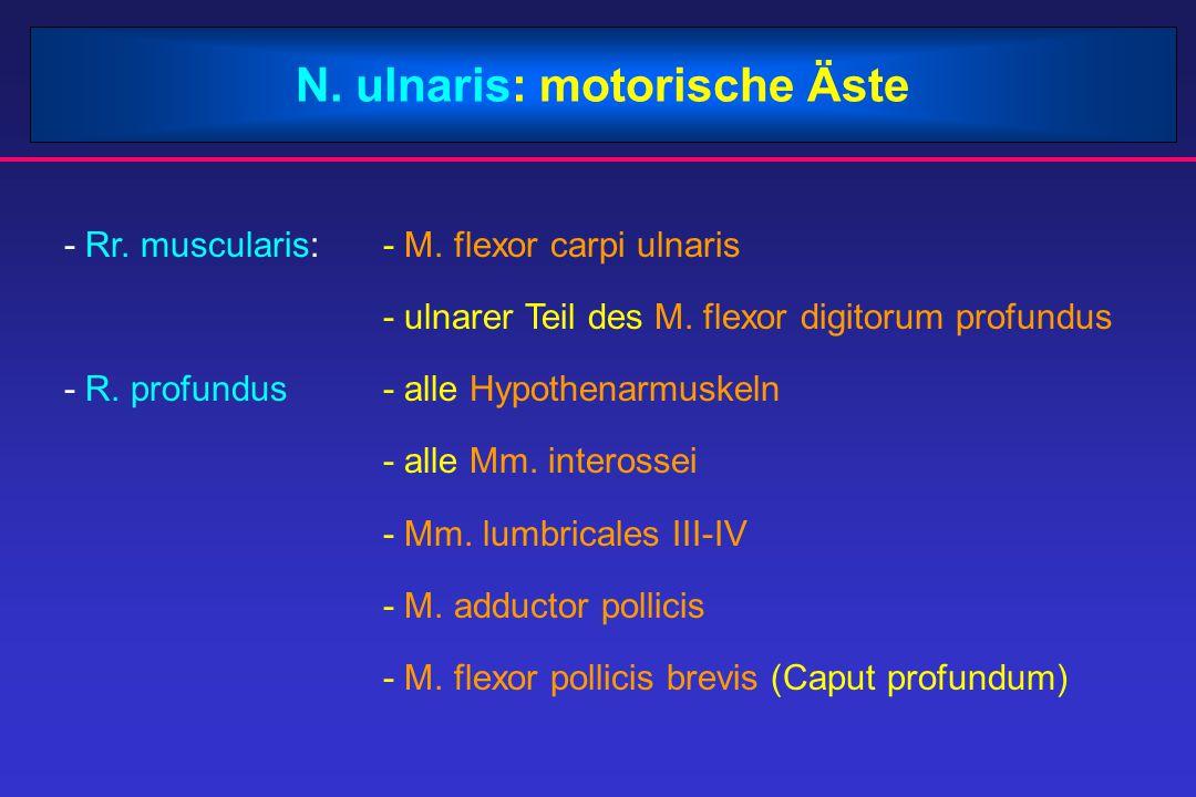 N. ulnaris: motorische Äste - Rr. muscularis:- M. flexor carpi ulnaris - ulnarer Teil des M. flexor digitorum profundus - R. profundus- alle Hypothena