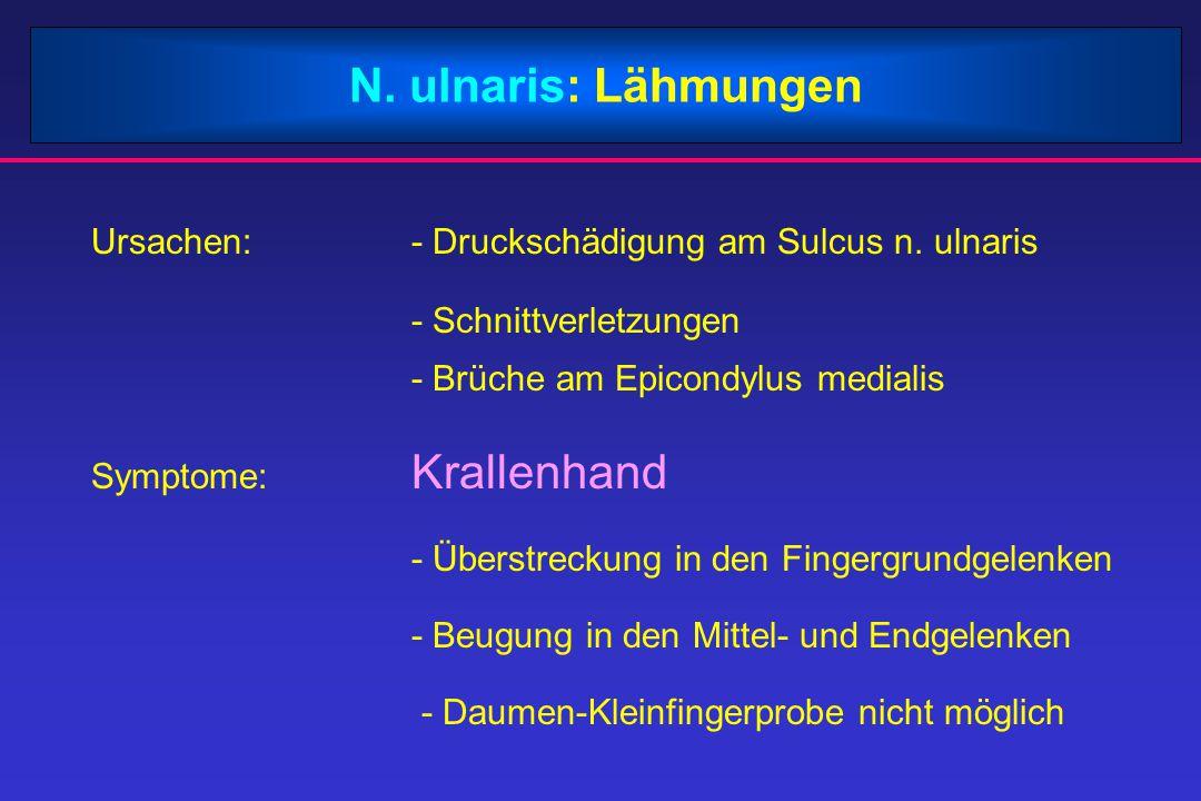 N.radialis  Bildung: - aus dem Fasciculus posterior (C5-Th1)  Leitmuskeln: OA: M.