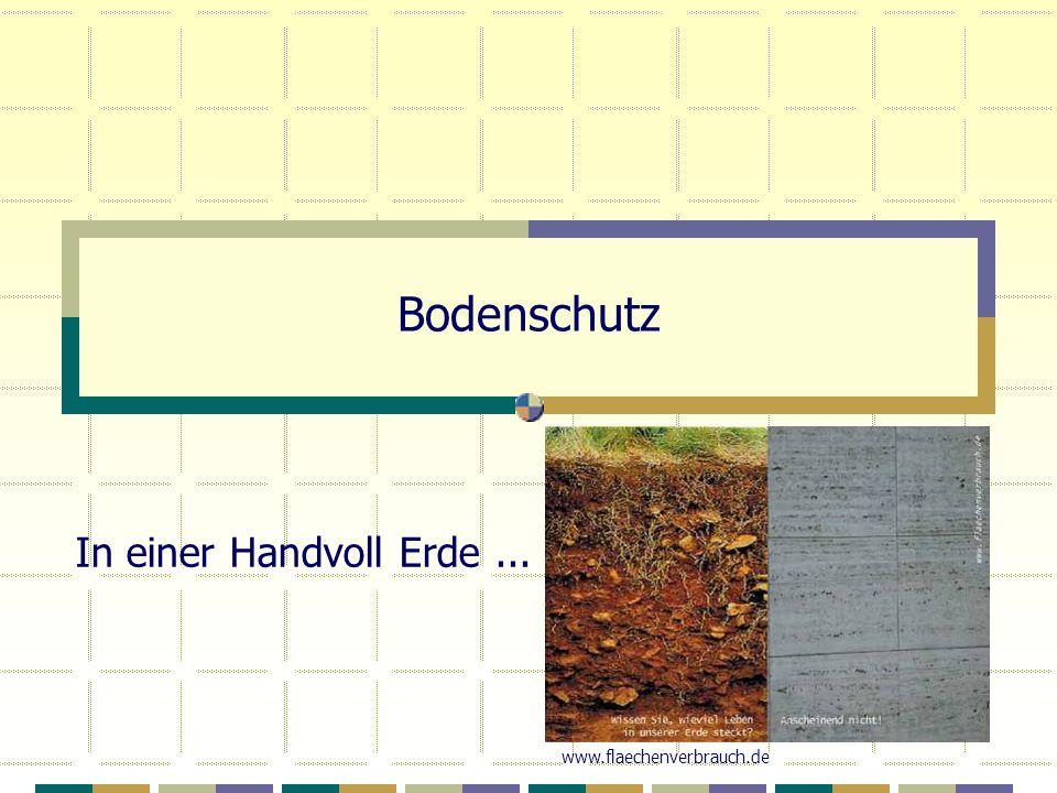 Bodenschutz In einer Handvoll Erde... www.flaechenverbrauch.de