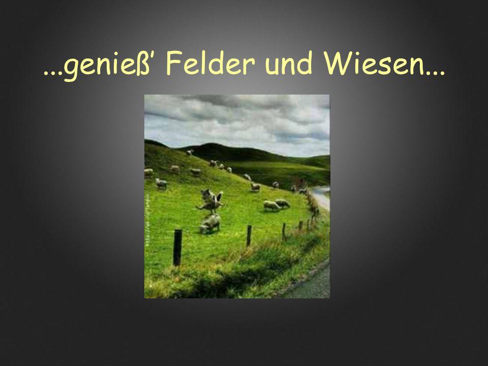 ...genieß' Felder und Wiesen...