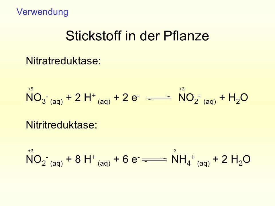 NO 2 - (aq) + 8 H + (aq) + 6 e - NH 4 + (aq) + 2 H 2 O Stickstoff in der Pflanze Nitratreduktase: Nitritreduktase: NO 3 - (aq) + 2 H + (aq) + 2 e - NO