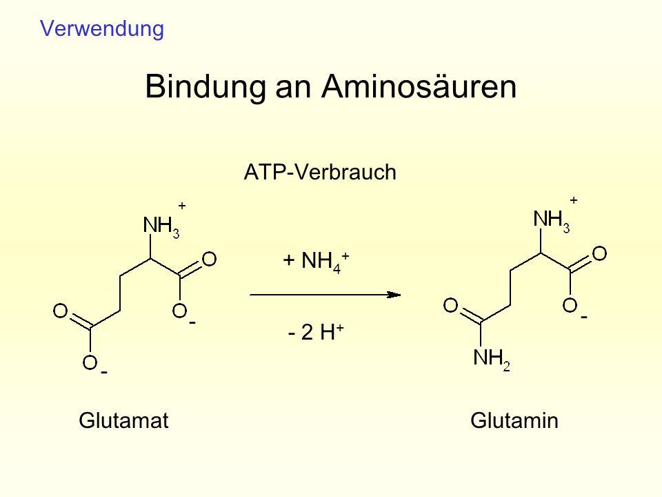 Bindung an Aminosäuren GlutamatGlutamin - - - + NH 4 + - 2 H + ATP-Verbrauch + + Verwendung