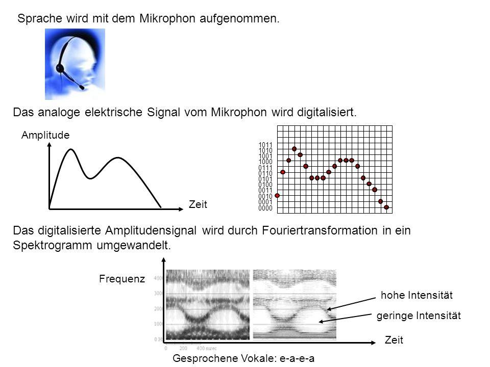 Im Spektrogramm kann man für die gesprochenen Vokale e-a-e-a eine deutliche Bänderstruktur erkennen.