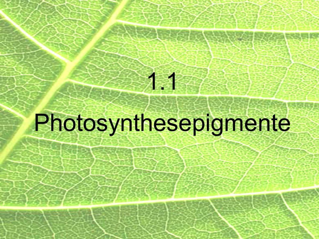 1.1 Photosynthesepigmente