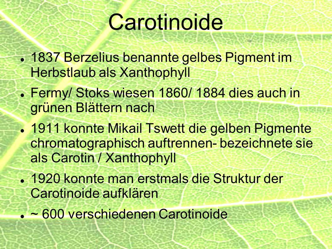 Carotinoide 1837 Berzelius benannte gelbes Pigment im Herbstlaub als Xanthophyll Fermy/ Stoks wiesen 1860/ 1884 dies auch in grünen Blättern nach 1911