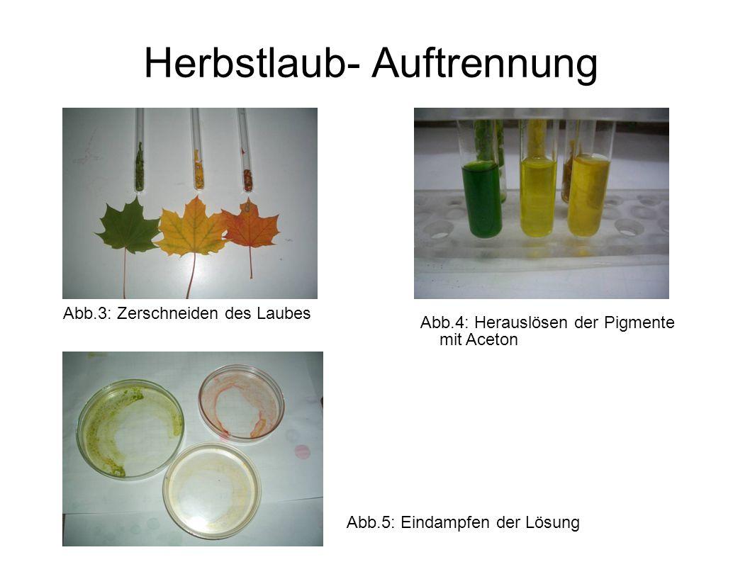 Herbstlaub- Auftrennung Abb.3: Zerschneiden des Laubes Abb.4: Herauslösen der Pigmente mit Aceton Abb.5: Eindampfen der Lösung