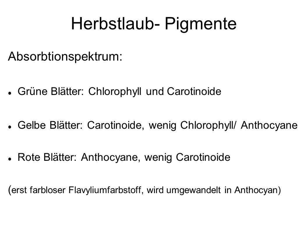 Herbstlaub- Pigmente Absorbtionspektrum: Grüne Blätter: Chlorophyll und Carotinoide Gelbe Blätter: Carotinoide, wenig Chlorophyll/ Anthocyane Rote Blä