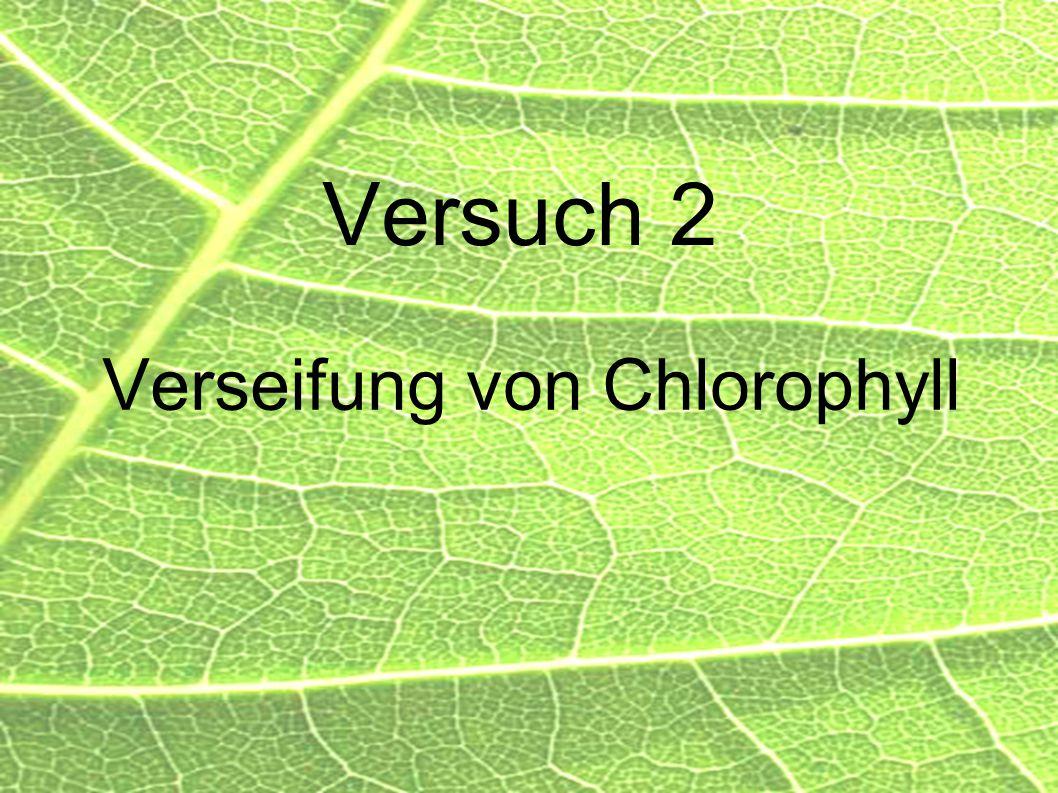 Versuch 2 Verseifung von Chlorophyll