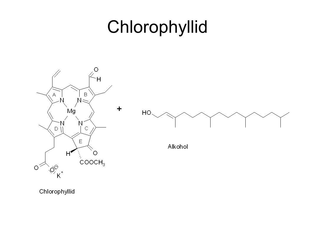 Chlorophyllid