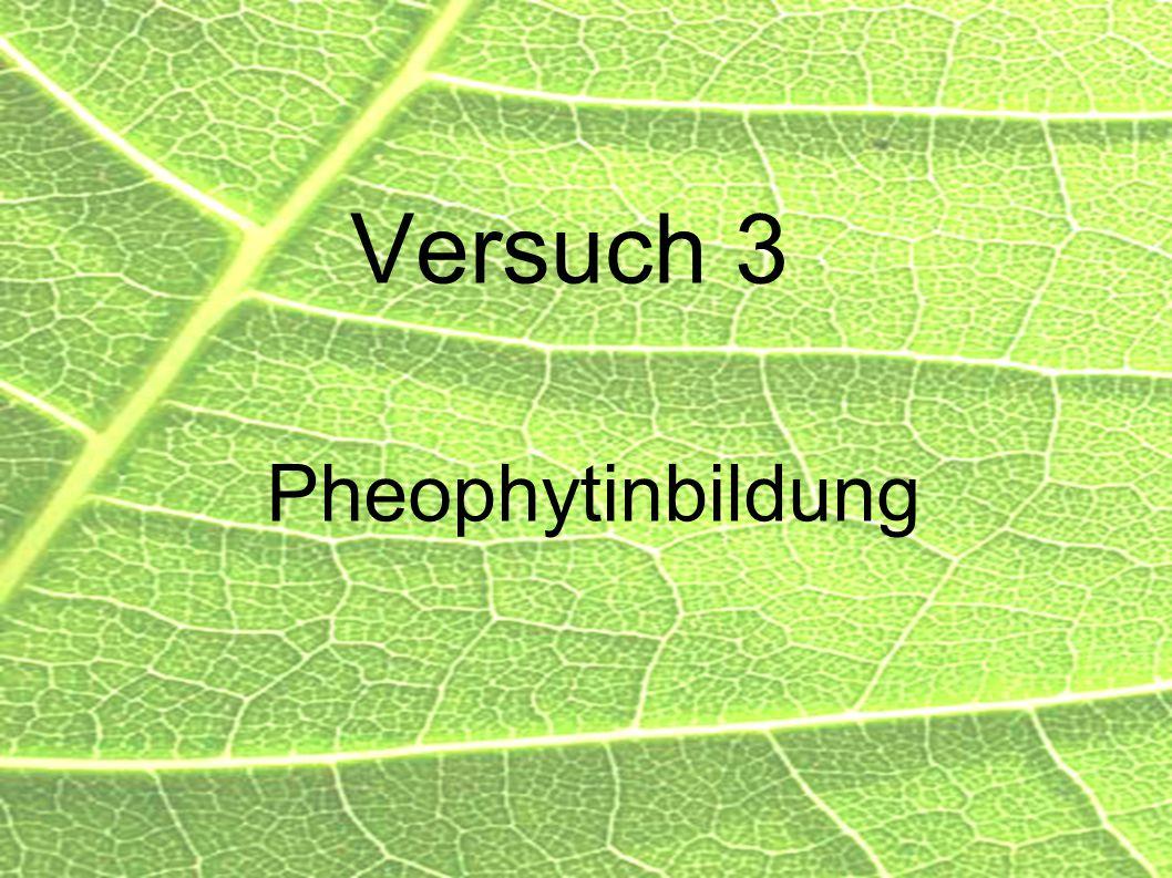 35 Versuch 3 Pheophytinbildung