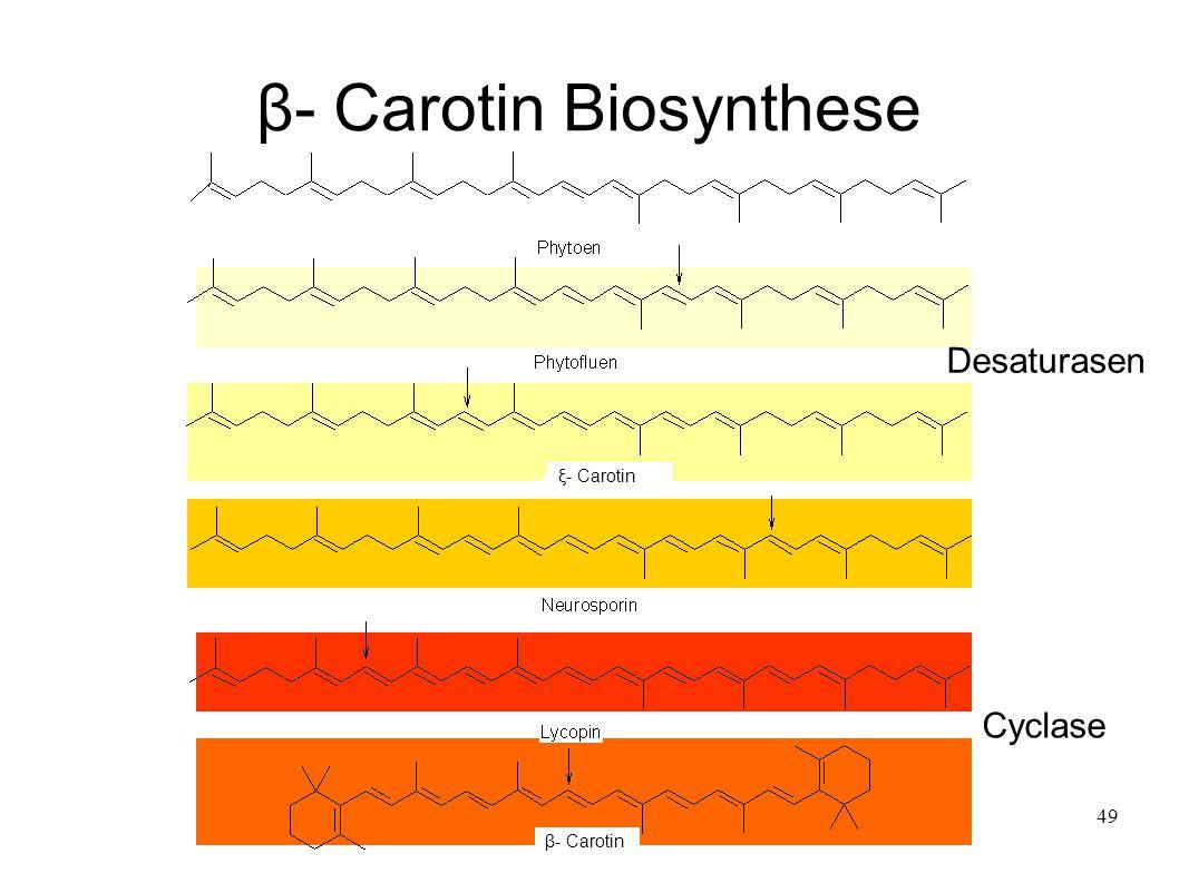 49 β- Carotin Biosynthese ξ- Carotin β- Carotin Desaturasen Cyclase