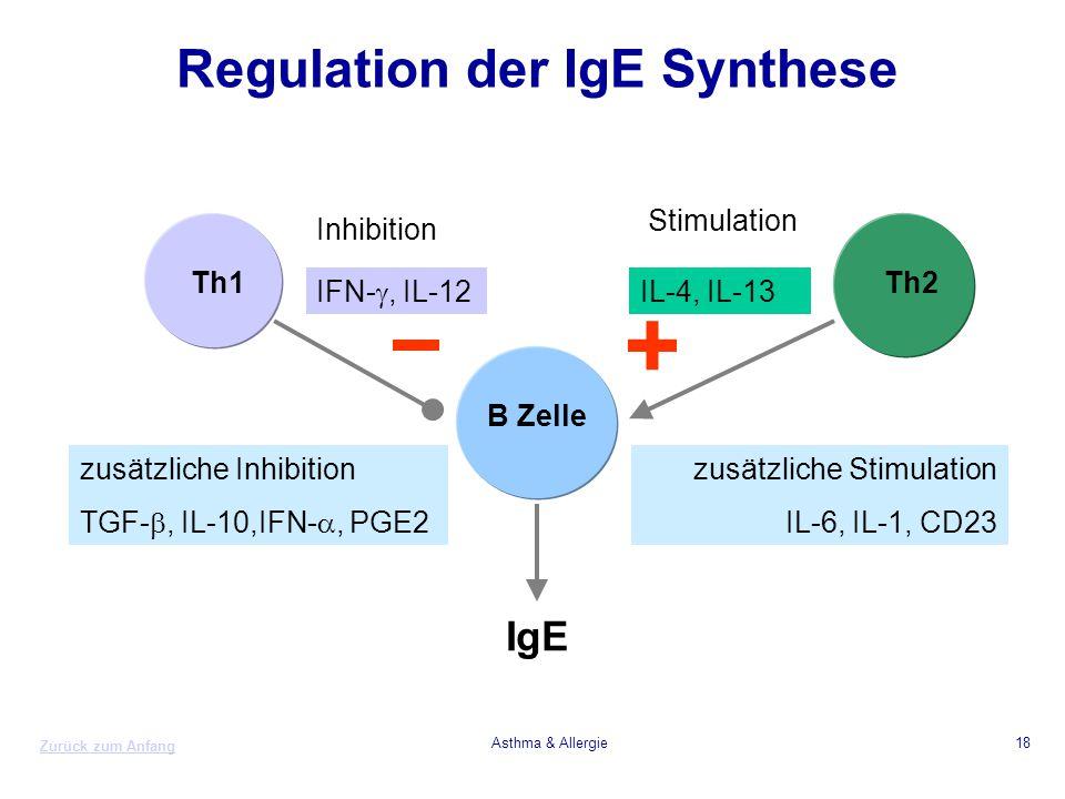 Zurück zum Anfang Asthma & Allergie18 Regulation der IgE Synthese Th1Th2 B Zelle IgE IL-4, IL-13 IFN- , IL-12 + zusätzliche Stimulation IL-6, IL-1, C