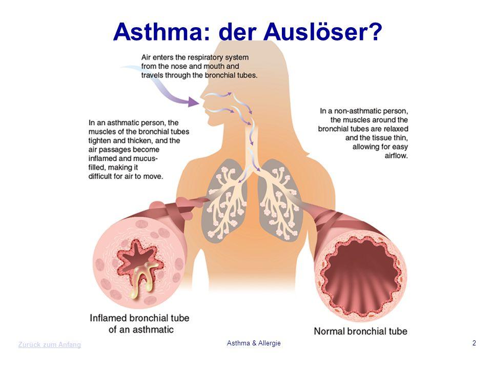 Zurück zum Anfang Asthma & Allergie2 Asthma: der Auslöser?
