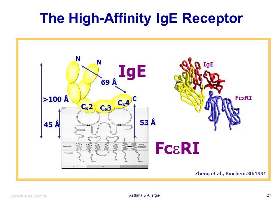 Zurück zum Anfang Asthma & Allergie24 The High-Affinity IgE Receptor Zheng et al., Biochem.30:1991 C  4 C  3 C  2 45 Å >100 Å 53 Å 69 Å C N N IgE F