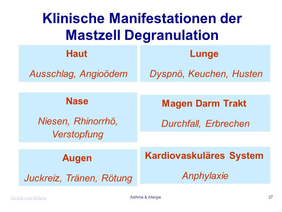 Zurück zum Anfang Asthma & Allergie27 Klinische Manifestationen der Mastzell Degranulation Haut Ausschlag, Angioödem Nase Niesen, Rhinorrhö, Verstopfu