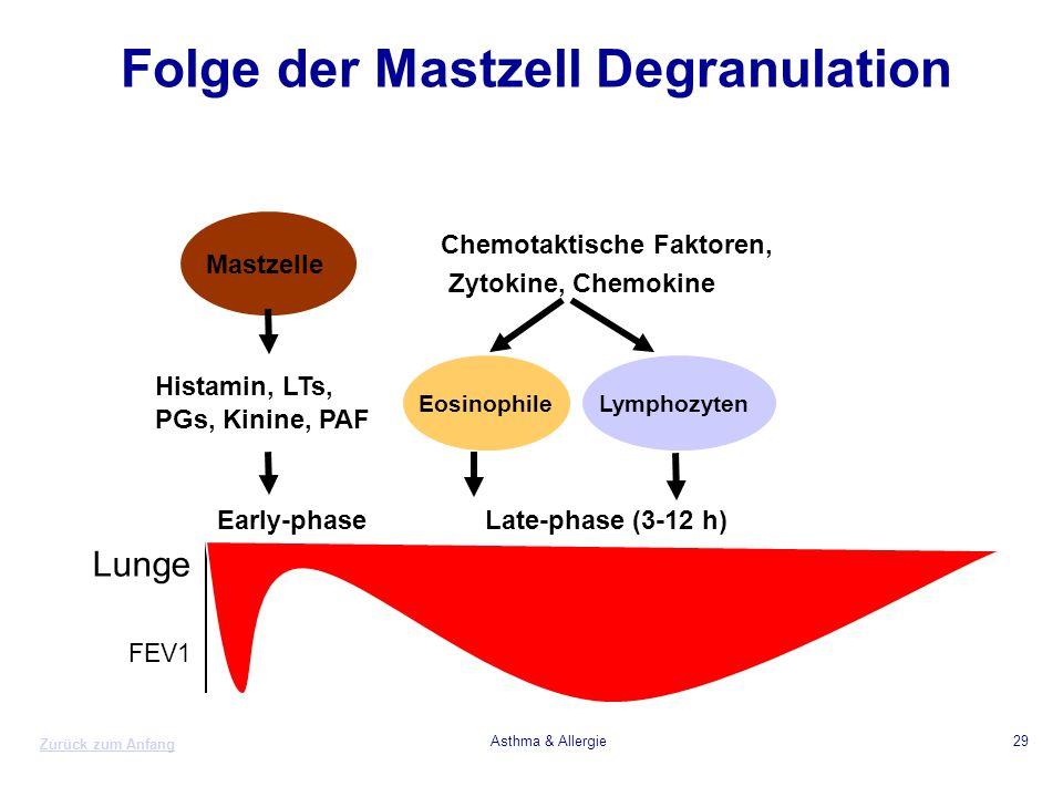 Zurück zum Anfang Asthma & Allergie29 Folge der Mastzell Degranulation Histamin, LTs, PGs, Kinine, PAF Chemotaktische Faktoren, Zytokine, Chemokine Lu
