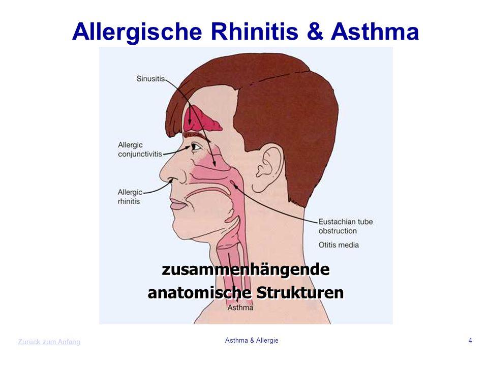 Zurück zum Anfang Asthma & Allergie4 Allergische Rhinitis & Asthma zusammenhängende anatomische Strukturen zusammenhängende anatomische Strukturen