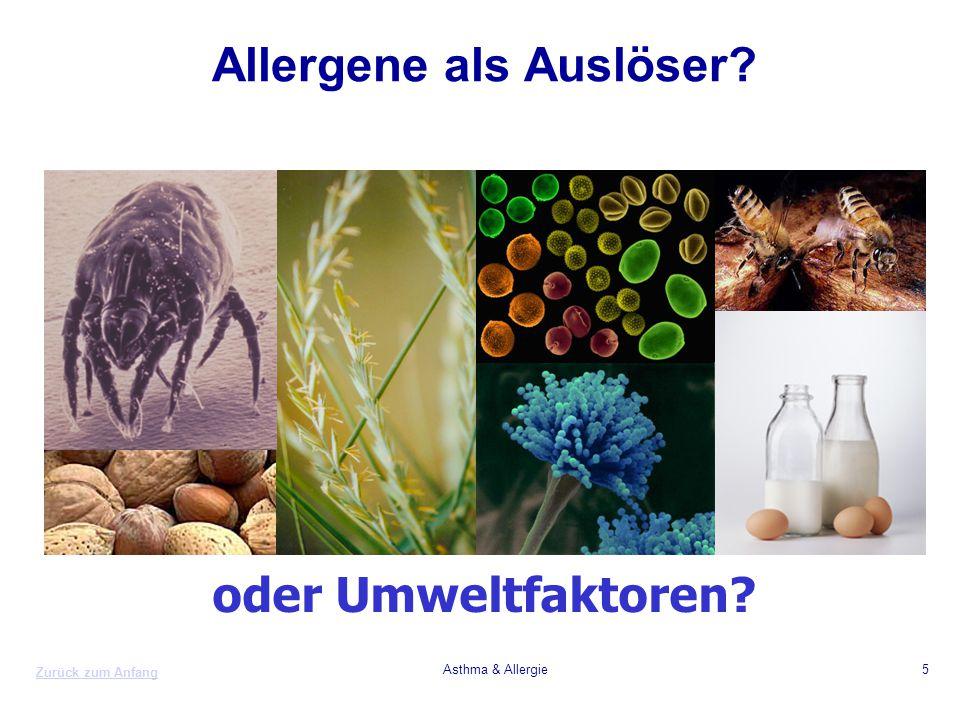 Zurück zum Anfang Asthma & Allergie5 Allergene als Auslöser? oder Umweltfaktoren?