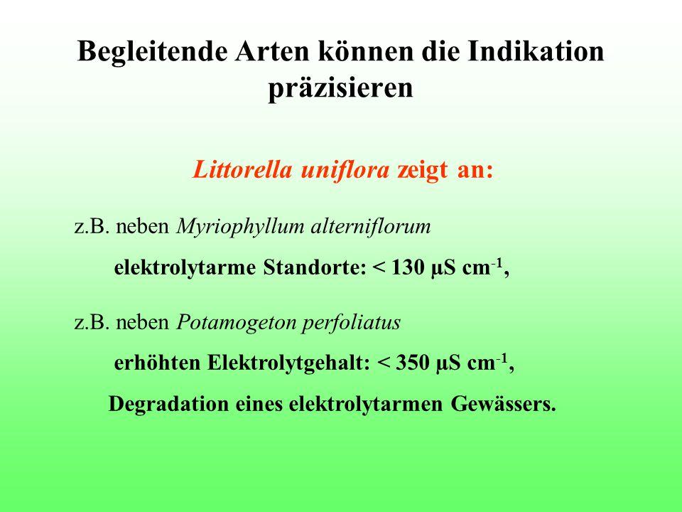 Begleitende Arten können die Indikation präzisieren Littorella uniflora zeigt an: z.B. neben Myriophyllum alterniflorum elektrolytarme Standorte: < 13