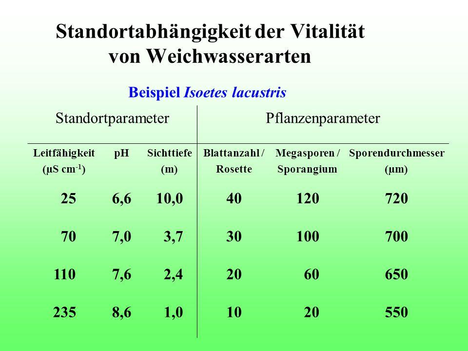 Standortabhängigkeit der Vitalität von Weichwasserarten StandortparameterPflanzenparameter Leitfähigkeit (µS cm -1 ) pHSichttiefe (m) Blattanzahl / Rosette Megasporen / Sporangium Sporendurchmesser (µm) 256,610,040120720 707,0 3,730100700 1107,6 2,420 60650 2358,6 1,010 20550 Beispiel Isoetes lacustris