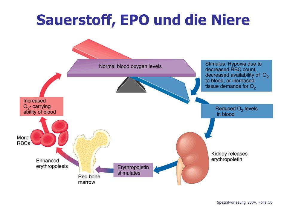 Spezialvorlesung 2004, Folie 10 Sauerstoff, EPO und die Niere