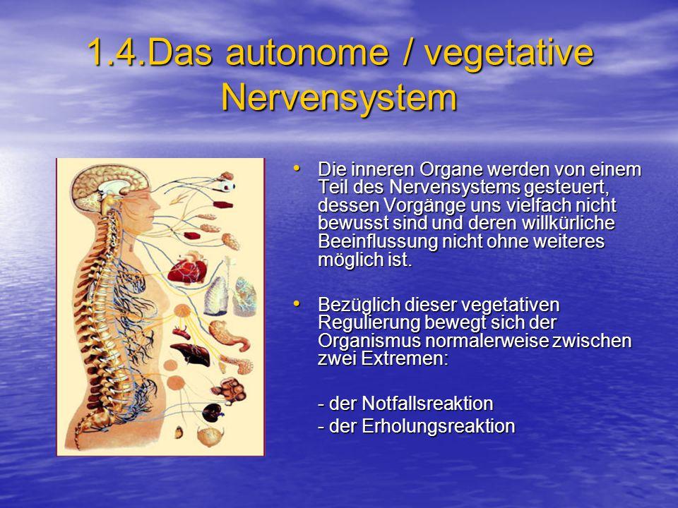 1.4.Das autonome / vegetative Nervensystem Die inneren Organe werden von einem Teil des Nervensystems gesteuert, dessen Vorgänge uns vielfach nicht bewusst sind und deren willkürliche Beeinflussung nicht ohne weiteres möglich ist.