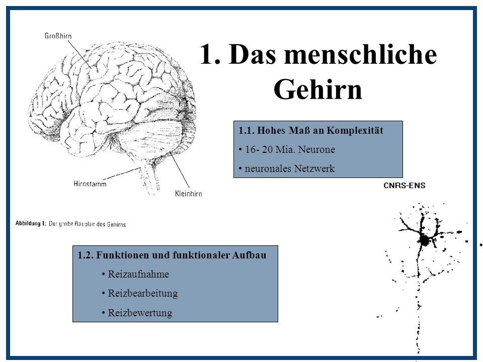 1. Das menschliche Gehirn 1.1. Hohes Maß an Komplexität 16- 20 Mia. Neurone neuronales Netzwerk 1.2. Funktionen und funktionaler Aufbau Reizaufnahme R