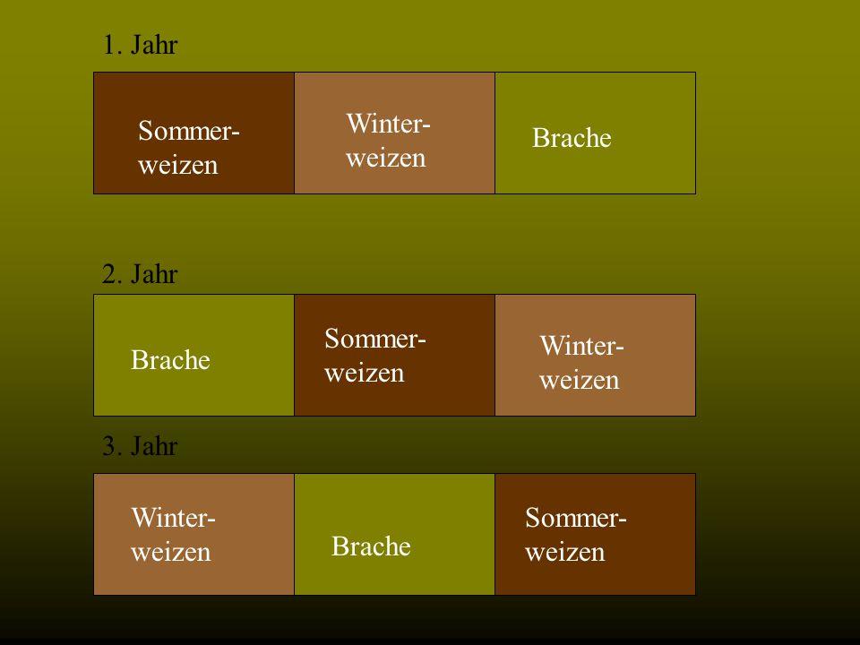 Beispiel Mit der Dreifelderwirtschaft konnte die Weizenernte im Mittelalter wesentlich erhöht werden. Sommer- weizen Winter- weizen Brache Sommer- wei