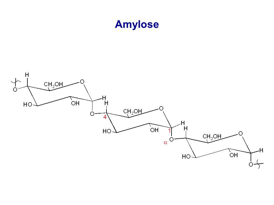 Amylose 1 4 
