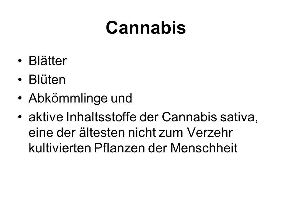 Cannabis Blätter Blüten Abkömmlinge und aktive Inhaltsstoffe der Cannabis sativa, eine der ältesten nicht zum Verzehr kultivierten Pflanzen der Menschheit