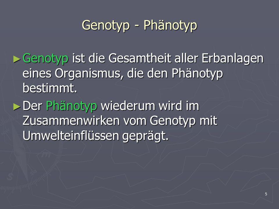 5 Genotyp - Phänotyp ► Genotyp ist die Gesamtheit aller Erbanlagen eines Organismus, die den Phänotyp bestimmt. ► Der Phänotyp wiederum wird im Zusamm