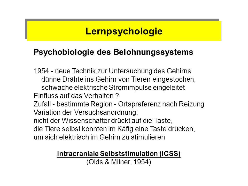 Motivationspsychologie Triebsystem Belohnungssystem Lustsystem Entkoppelung vonTriebbefriedigung und Belohnungssystem von Belohnungssystem und Lustsys