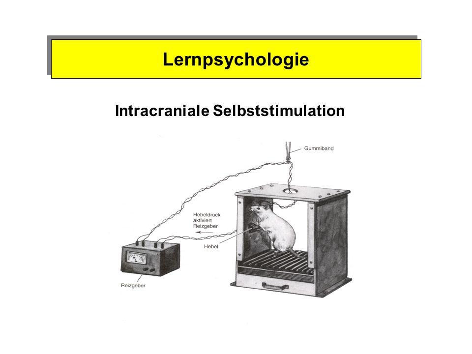 Psychobiologie des Belohnungssystems 1954 - neue Technik zur Untersuchung des Gehirns dünne Drähte ins Gehirn von Tieren eingestochen, schwache elektrische Stromimpulse eingeleitet Einfluss auf das Verhalten .