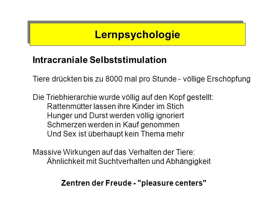 Intracraniale Selbststimulation