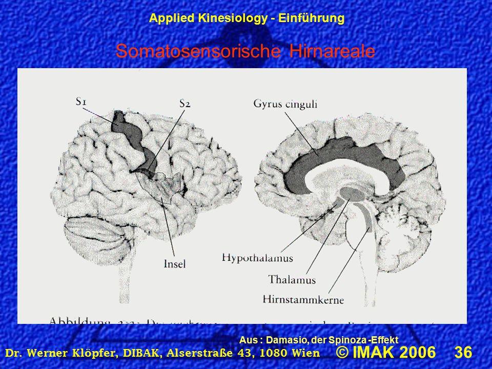 Applied Kinesiology - Einführung © IMAK 2006 36 Dr.