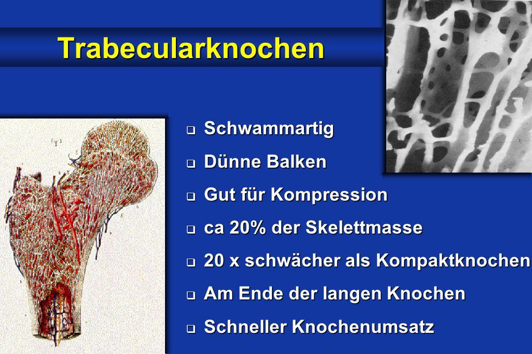  Schwammartig  Dünne Balken  Gut für Kompression  ca 20% der Skelettmasse  20 x schwächer als Kompaktknochen  Am Ende der langen Knochen  Schneller Knochenumsatz Trabecularknochen