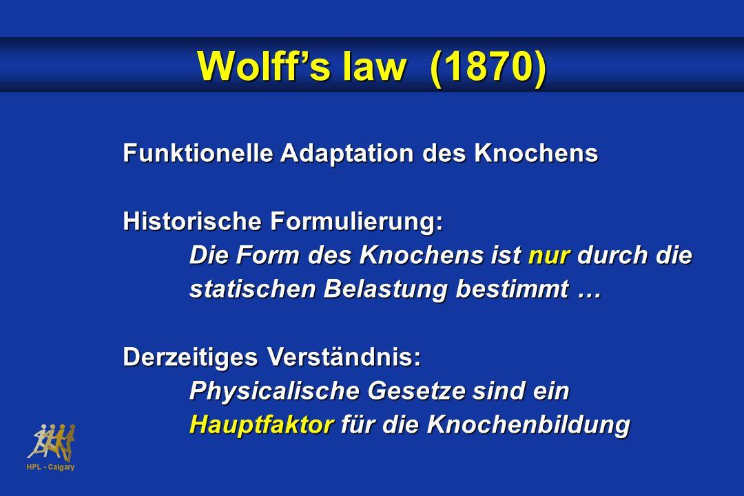 Wolff's law (1870) Funktionelle Adaptation des Knochens Historische Formulierung: Die Form des Knochens ist nur durch die statischen Belastung bestimmt … Derzeitiges Verständnis: Physicalische Gesetze sind ein Hauptfaktor für die Knochenbildung