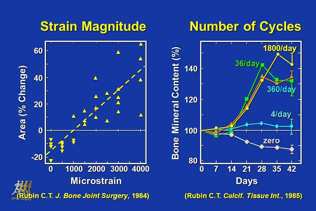 (Rubin C.T.J. Bone Joint Surgery, 1984) (Rubin C.T.