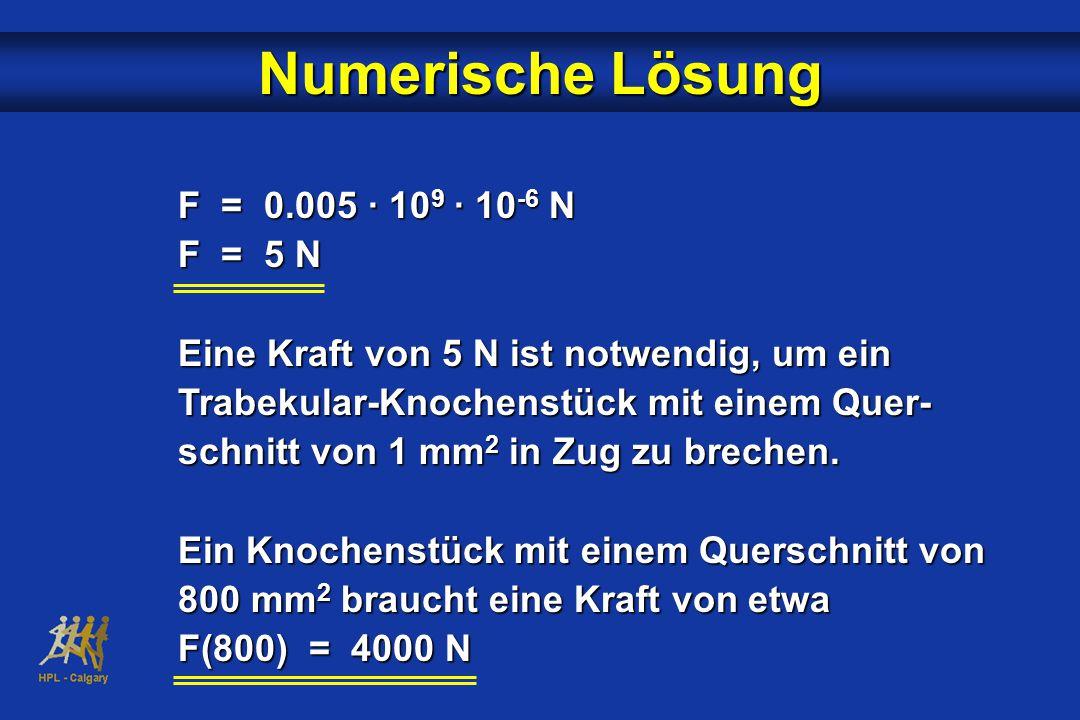 Numerische Lösung F = 0.005 · 10 9 · 10 -6 N F = 5 N Eine Kraft von 5 N ist notwendig, um ein Trabekular-Knochenstück mit einem Quer- schnitt von 1 mm 2 in Zug zu brechen.