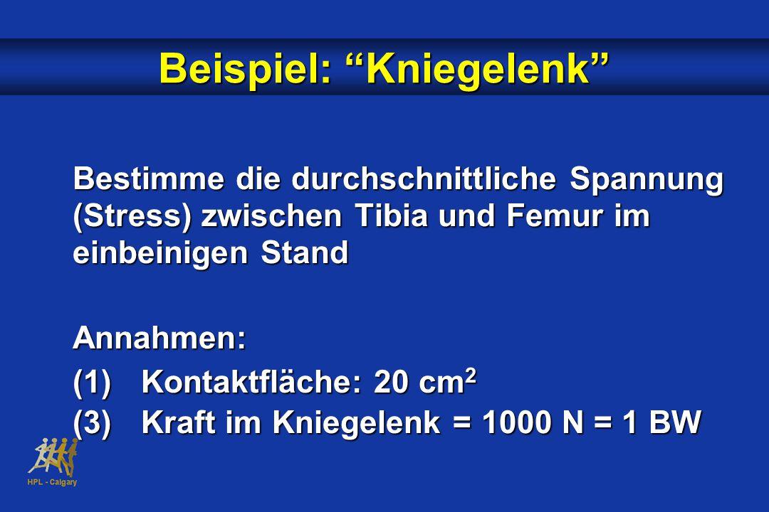 Beispiel: Kniegelenk Bestimme die durchschnittliche Spannung (Stress) zwischen Tibia und Femur im einbeinigen Stand Annahmen: (1)Kontaktfläche: 20 cm 2 (3)Kraft im Kniegelenk = 1000 N = 1 BW