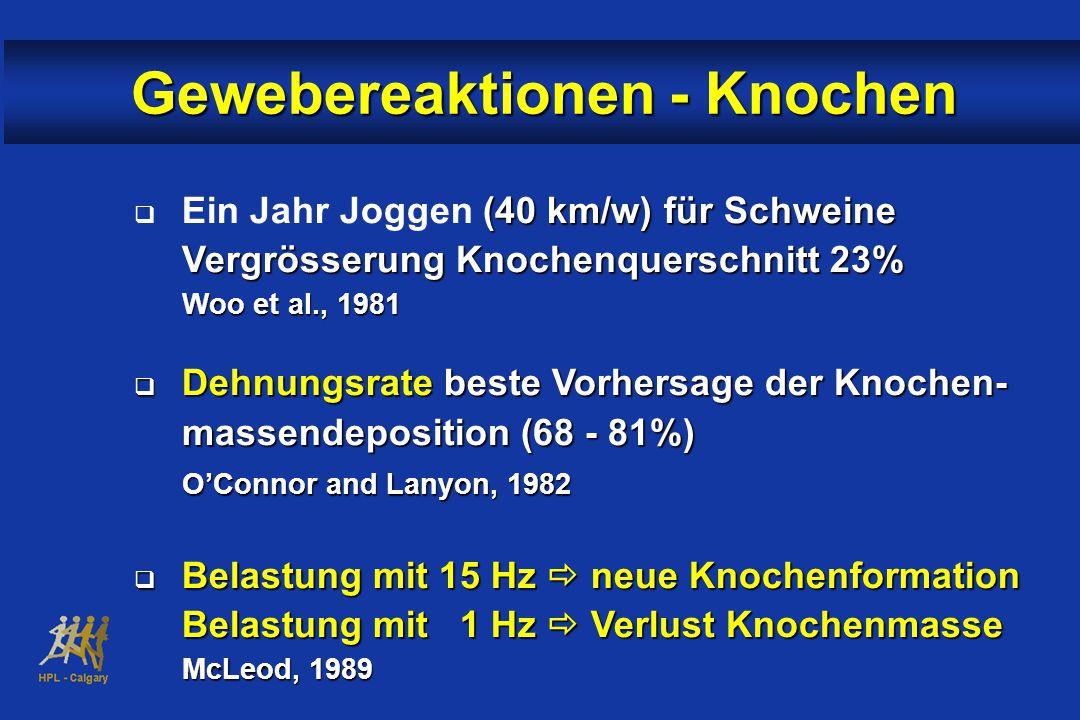  (40 km/w) für Schweine Vergrösserung Knochenquerschnitt 23%  Ein Jahr Joggen (40 km/w) für Schweine Vergrösserung Knochenquerschnitt 23% Woo et al., 1981  Dehnungsrate beste Vorhersage der Knochen- massendeposition (68 - 81%) O'Connor and Lanyon, 1982  Belastung mit 15 Hz  neue Knochenformation Belastung mit 1 Hz  Verlust Knochenmasse McLeod, 1989 Gewebereaktionen - Knochen