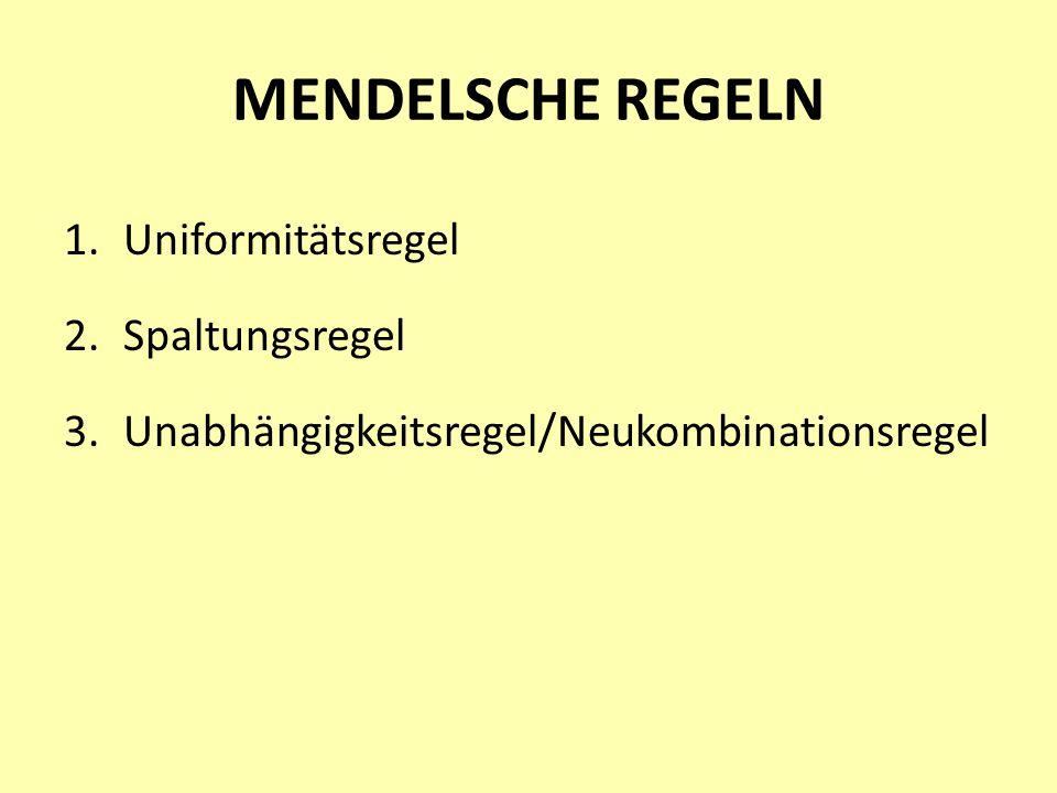 MENDELSCHE REGELN 1.Uniformitätsregel 2.Spaltungsregel 3.Unabhängigkeitsregel/Neukombinationsregel