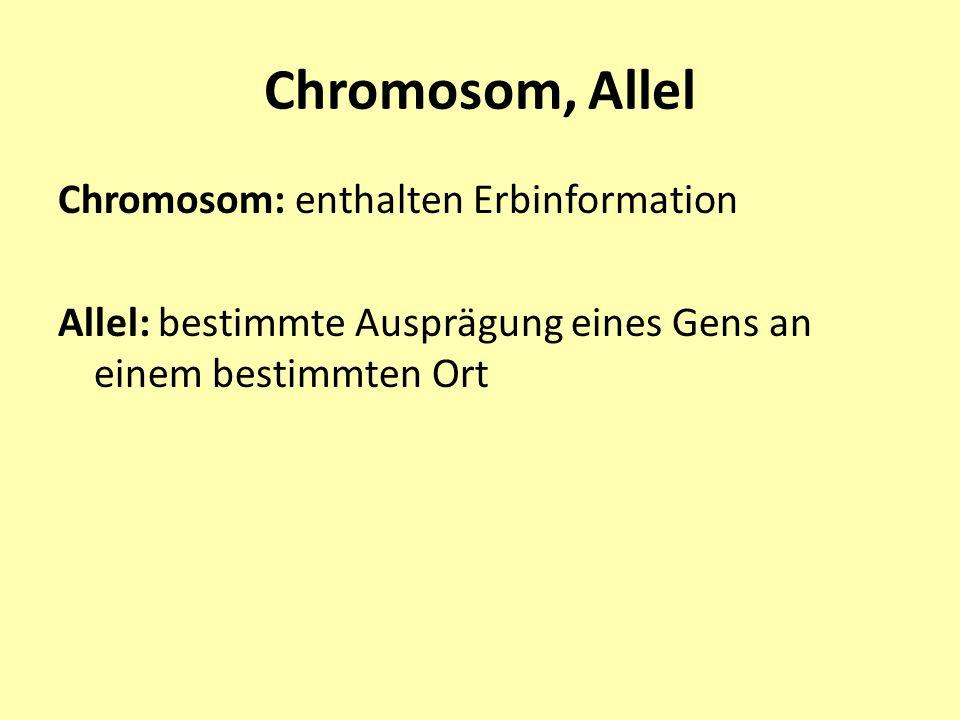 Chromosom, Allel Chromosom: enthalten Erbinformation Allel: bestimmte Ausprägung eines Gens an einem bestimmten Ort
