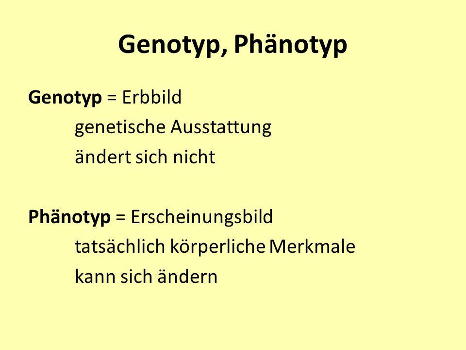 Genotyp, Phänotyp Genotyp = Erbbild genetische Ausstattung ändert sich nicht Phänotyp = Erscheinungsbild tatsächlich körperliche Merkmale kann sich än