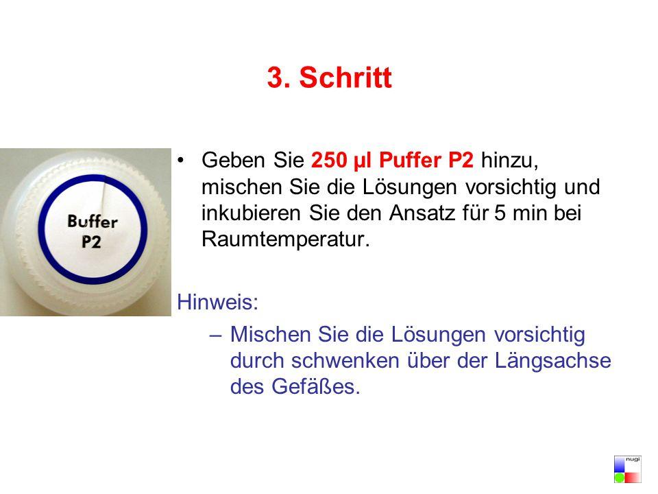 3. Schritt Geben Sie 250 µl Puffer P2 hinzu, mischen Sie die Lösungen vorsichtig und inkubieren Sie den Ansatz für 5 min bei Raumtemperatur. Hinweis: